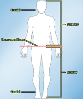 Medical_Terminology_Lesson_-_Body_Planes-resized-170.jpg